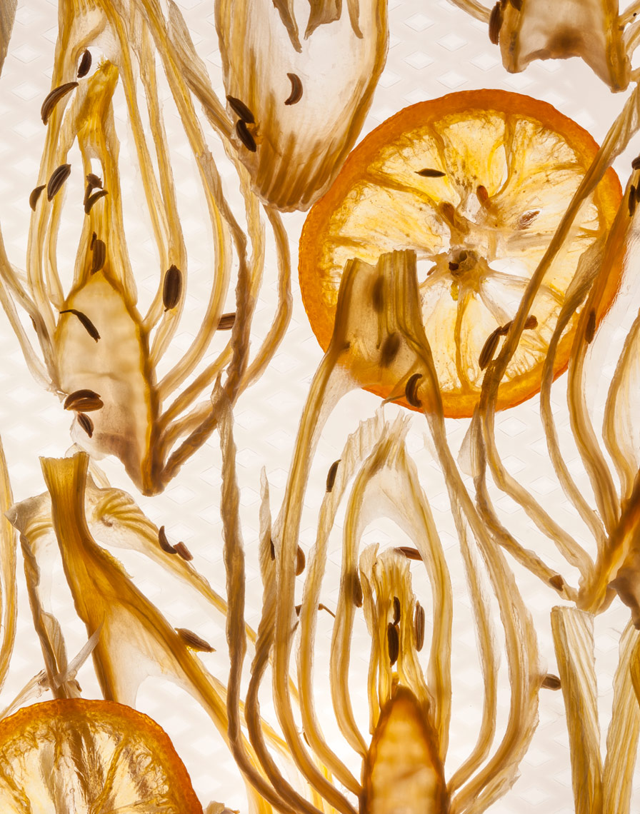 Dried_Sweet_Fennel_Fans_v2